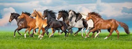 Horse herd run on green pasture stock image