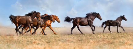 Horse herd run stock photos