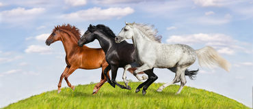 Horse herd run. Horses run gallop on green pasture against beautiful sky Royalty Free Stock Photography