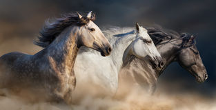 Horse herd run. Horses with long mane portrait run gallop in desert dust royalty free stock photos