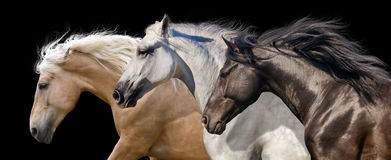 Horse herd run. Horses with long mane portrait run gallop in desert dust stock photos