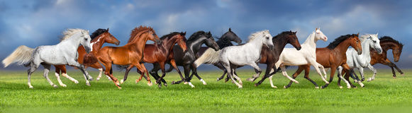 Horse herd run. Herd of horses on summer pasture, banner for website Royalty Free Stock Photography
