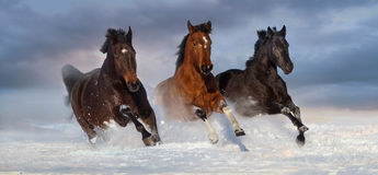 Horse herd run in snow Stock Photos