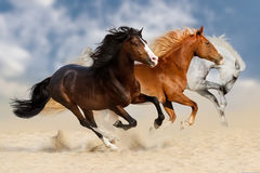 Horse herd run. Three horses run gallop  in dust Royalty Free Stock Image