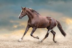 Horse herd run. Wild horses run in dark desert dust stock photos