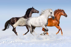 Horse herd run in winter. Red black and white horse run gallop at snow field Royalty Free Stock Photography