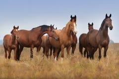 Horse herd standing stock photos