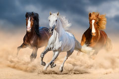 Horse herdin desert. Three horse with long mane run gallop in desert royalty free stock photo