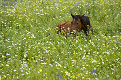 Horse hiding in tall grass Stock Photo