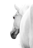 Horse in high key. White horse in high key shot royalty free stock photo