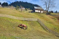 Horse on hill Stock Photography