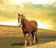 Horse on a hill Royalty Free Stock Photos