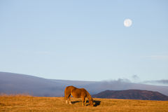 Horse on the hill Royalty Free Stock Image