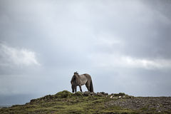 Horse on a hill Royalty Free Stock Images
