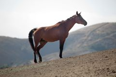 Horse on a Hill in the Mountains of California Stock Photo