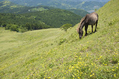 Horse and hillside Stock Images