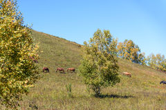 The horse on the hillside stock photos