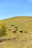 The horse on the hillside stock photo