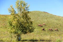 The horse on the hillside stock image