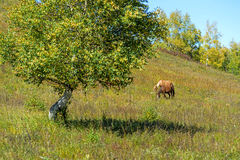 The horse on the hillside royalty free stock image