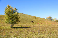 The horse on the hillside royalty free stock images