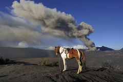 Horse for Hire at Mount Bromo. East Java, Indonesia Royalty Free Stock Photo