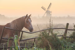 Horse in Holland. Horse in a meadow near a windmill during a foggy, autumn sunrise. Groningen, Netherlands Stock Photo