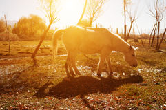 Horse at Holy Fish Pond Royalty Free Stock Images