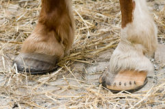 Horse hoof Royalty Free Stock Photography