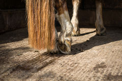 Horse hoof Royalty Free Stock Images
