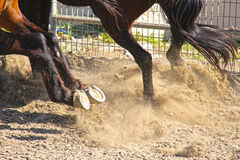 Horse hoof explosion. Royalty Free Stock Photo