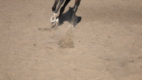Horse hoof horseshoe