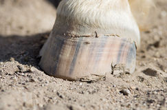 Horse hoof. Stands on ground Royalty Free Stock Image
