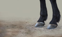 Horse Hoofs. A close up of a horses legs and hoofs on sandy ground Stock Photos