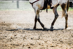 Horse hoofs. Hoofs of white horse being ridden in field Royalty Free Stock Images