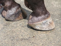 Horse hooves Stock Photo