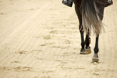 Horse hooves Stock Image