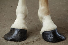 Horse Hooves. A pair of horse hooves Royalty Free Stock Photos