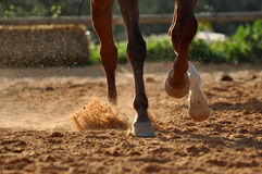 Horse hooves Royalty Free Stock Photo