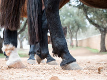 Horse hooves close up Stock Images