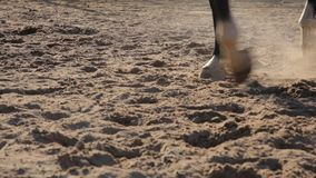 Horse hooves closeup stock video footage