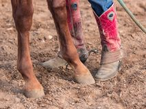 Horse Hooves and Cowboots Boots. Closeup of Cowboy Boots and Horse Hooves taken at Texas Ranch royalty free stock photo