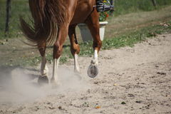 Horse hooves in the dust Royalty Free Stock Photography