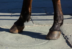 Horse hooves on the flagstones Stock Photo