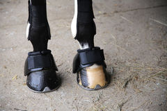 Horse hooves of front legs close up Royalty Free Stock Photos