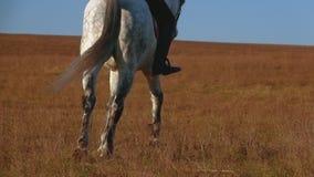 Horse hooves gallop on horseback . Slow motion. Close up
