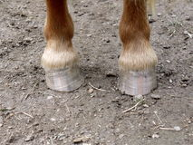 Horse hooves in sand Stock Images
