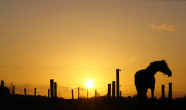 Horse on horizon backlit by sunset. A horse standing on the horizon during sunset Stock Photo