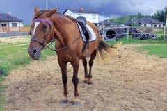 Horse on horse farm. I love horses, so I made a couple of photos Stock Photo