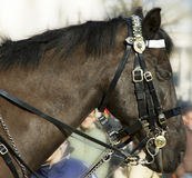 Horse at the horse guard parade. Stock Photography